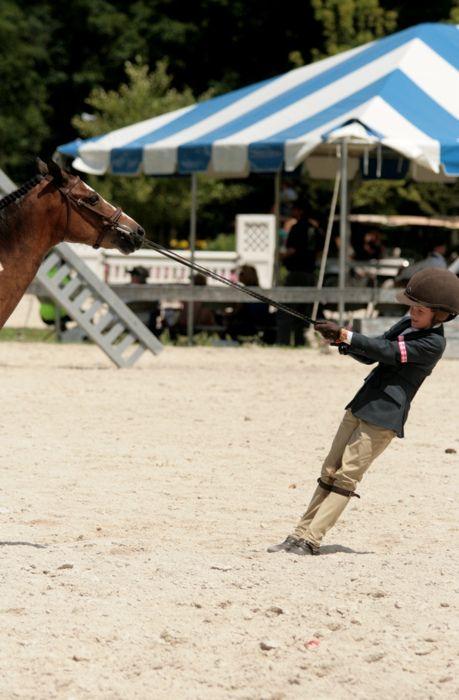 lol stubborn ponies!