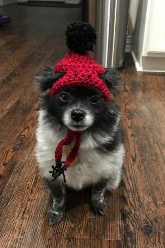 Toboggan Hat for Small Dogs (Crochet Pattern) in 2019  61beaa0731a