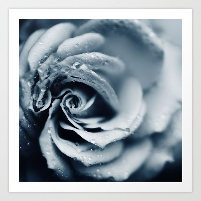 Macro Photography Of A Rose With Raindrops In A Soft Blue Tone Blue Framed Art Blue Art Prints Framed Art Prints