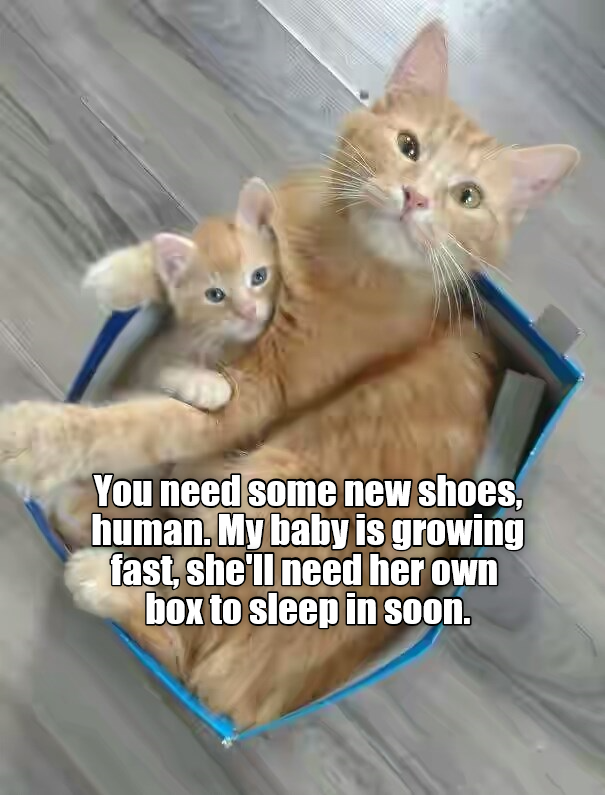 Corvette Owners Shoes Meme