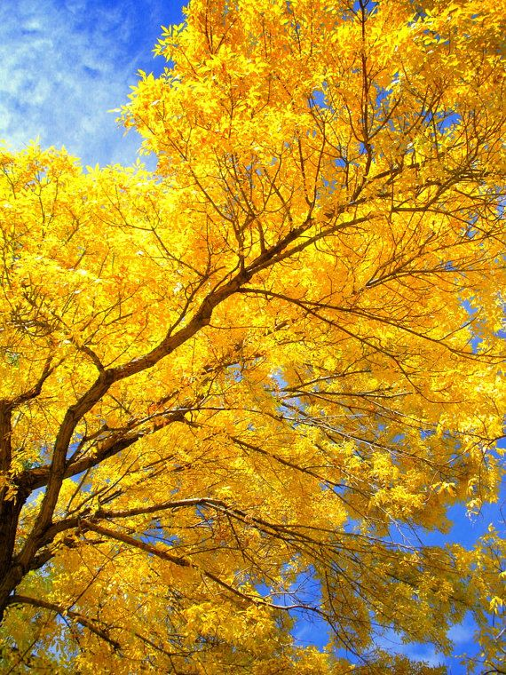 This Item Is Unavailable Etsy Autumn Leaves Art Ash Leaf Autumn Art