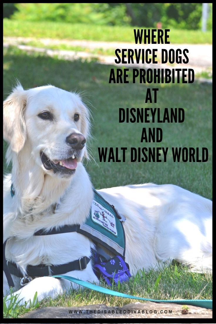 Click On My Post Before You Book Your Disneyland Or Walt Disney