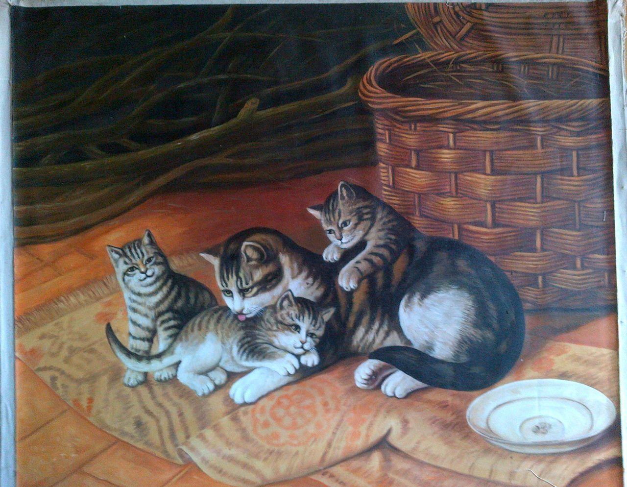 Gambar Kucing Persia Http Wwwdagelanmemecom Gambar Kucing