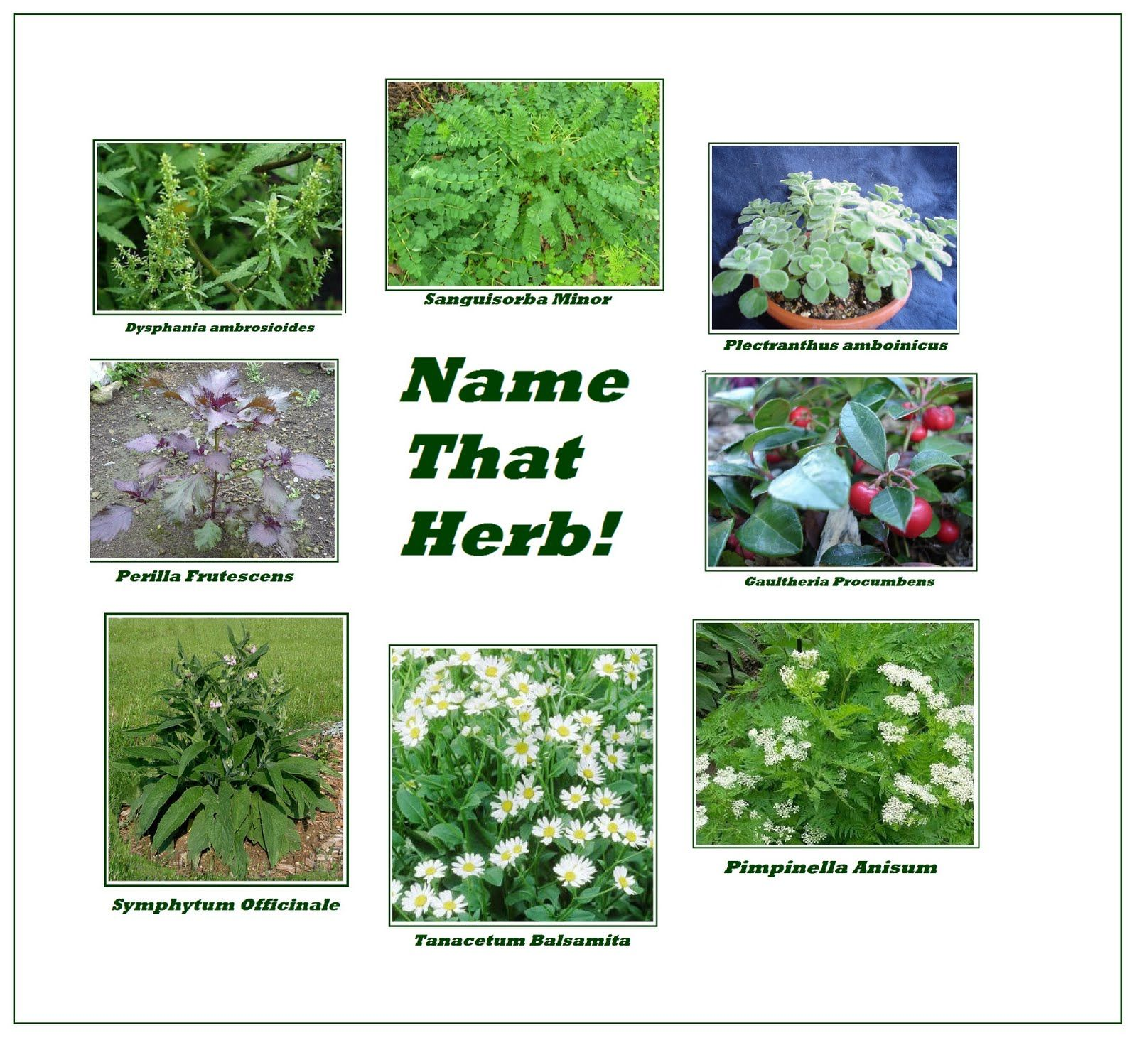 Unusual Herb Presentation With Images Herbs Plant