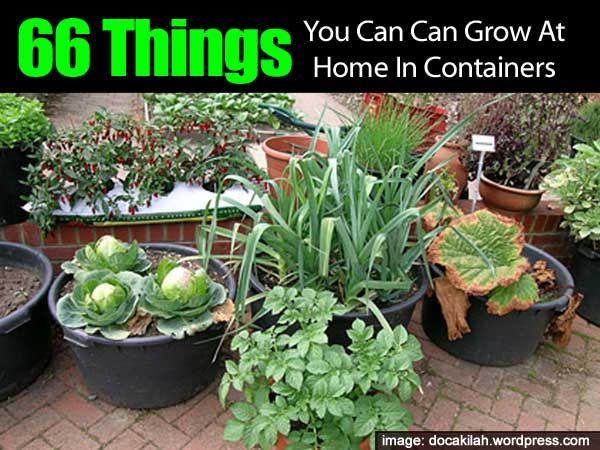 66 Things You Can Grow At Home In Containers Gardens 400 x 300
