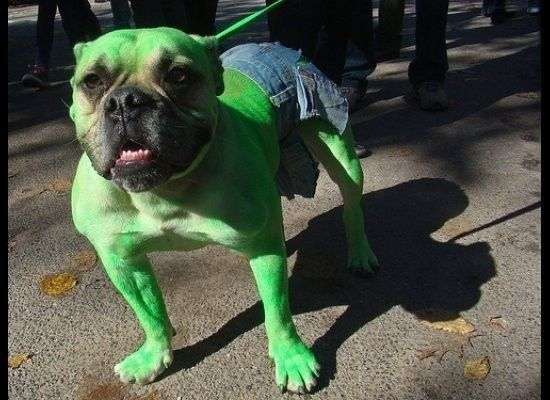 The Incredible Hulk Bull Dog Pet Halloween Costumes Dog