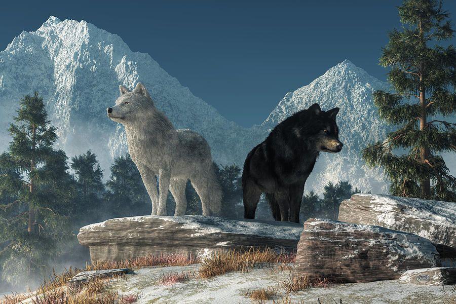 White Wolf, Black Wolf By Daniel