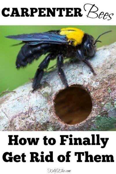 Pin on carpenter bees