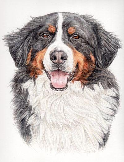 24 Beste Berner Sennenhund Malvorlage Beste Malvorlagen