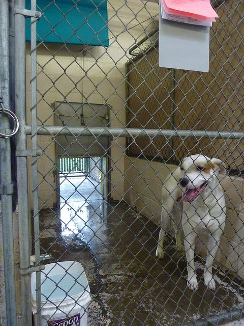 Housing Description Double Sided Back To Back Kennel What
