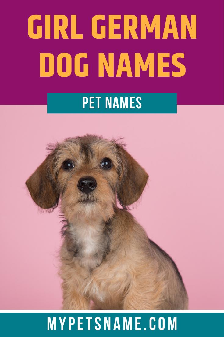 Girl German Dog Names In 2020 German Dog Names Dog Names German Dogs