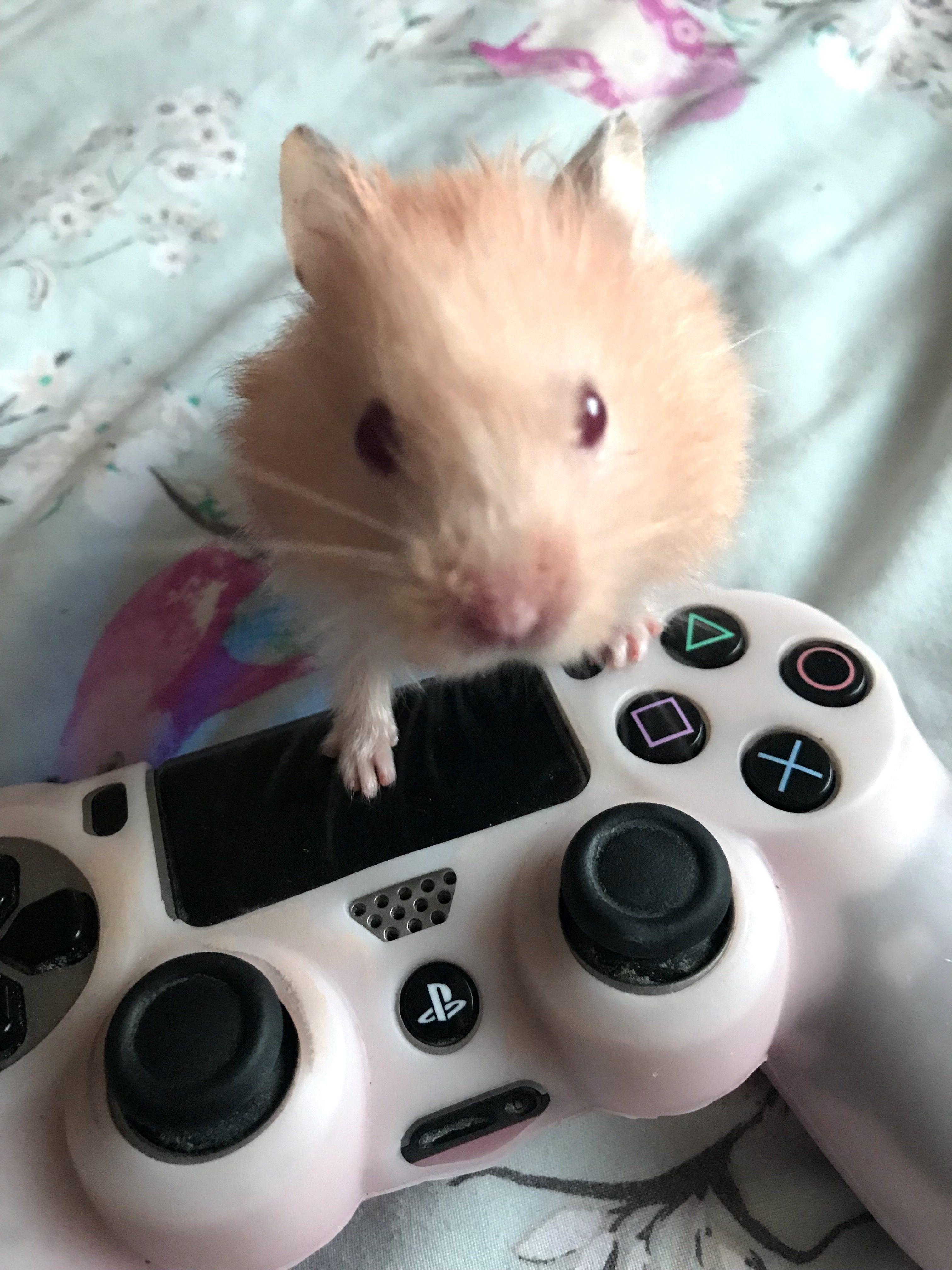 best rodent pet reddit