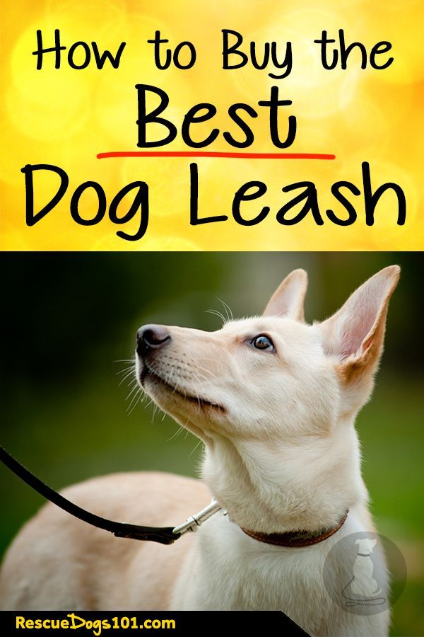 How To Choose The Best Dog Leash Dog Leash Dog Training Tools Dogs