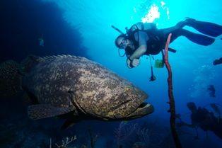Diving In The Jardines De La Reina Cuba Diving Southeastern