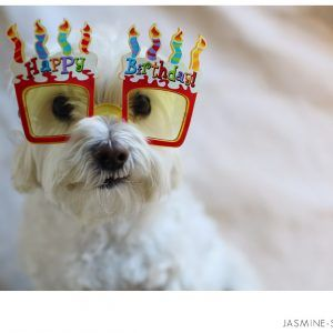 Cute Dog Happy Birthday Pictures Ifttt 2i6GF0F
