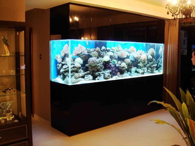 Fish For Wall Mounted Aquarium Aquarium Design Fish Tank Wall Wall Aquarium