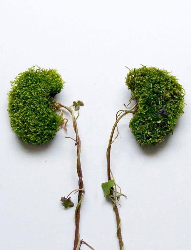 Menschliche Organe aus Pflanzen & Blumen | Art & Design | Pinterest ...