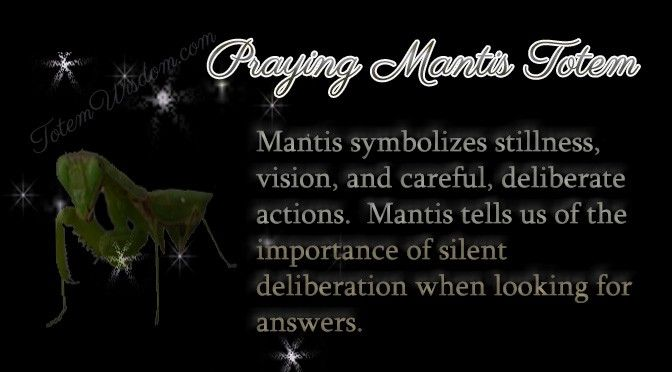 praying mantis symbolsim | devine | Praying mantis symbolism