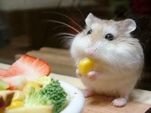 cute mice - Google Search animals Pinterest Animal
