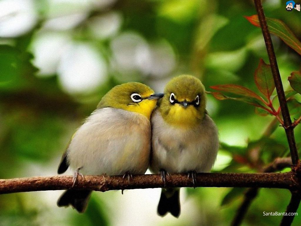 Stop The Birds Beautiful Birds Cute Birds Animals