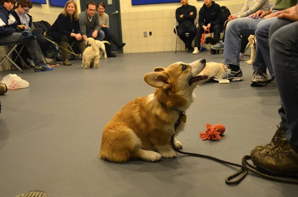 Puppy Training Class At Andrea Arden Dog Training In New York City