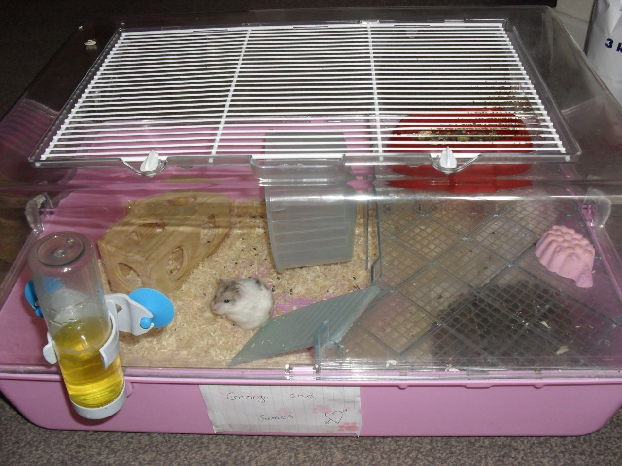 Dwarf Hamster Cages Pets At Home