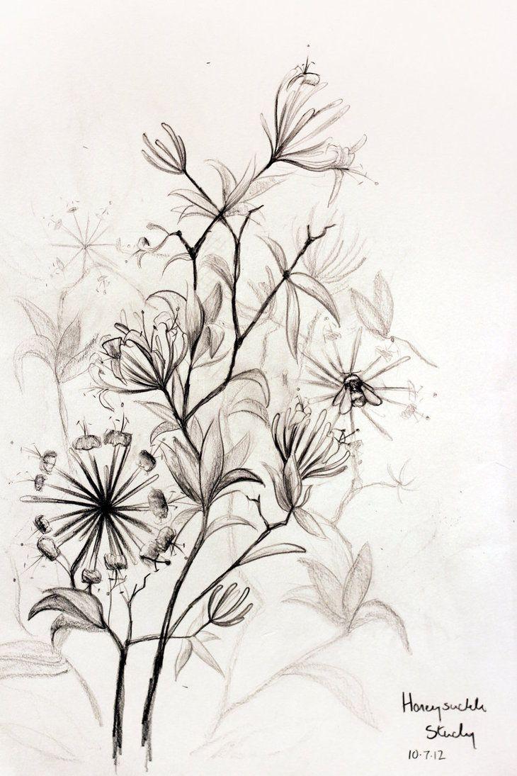 honeysuckle tattoo tattoo ideas pinterest les fleurs tatouages et fleur. Black Bedroom Furniture Sets. Home Design Ideas