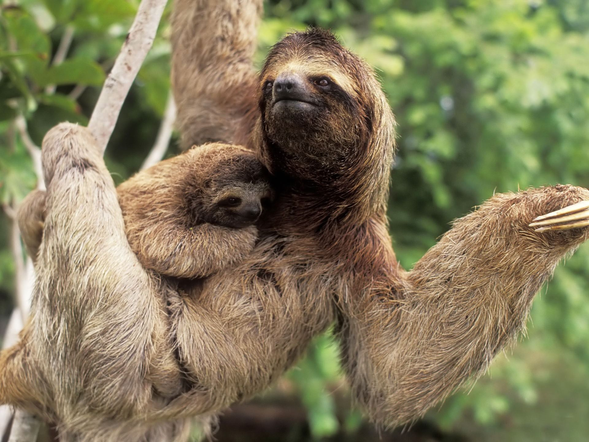 Sloth going to the bathroom - Sloth Baby