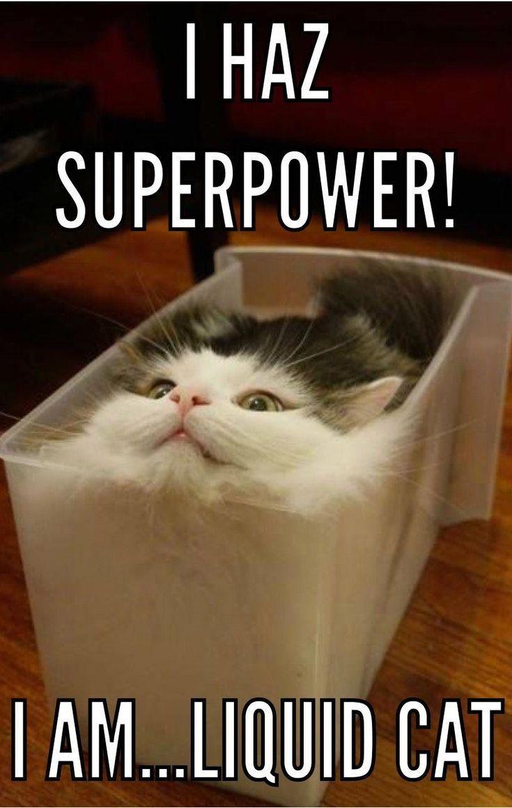 Cat Superpower Cat Cats Cutecats Kitty Kitties Kittycat Kittens Funnycats Catlov Funny Animal Jokes Cute Animal Memes Funny Animal Quotes