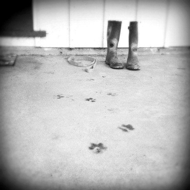 Catherine Panebianco perros viejos 12