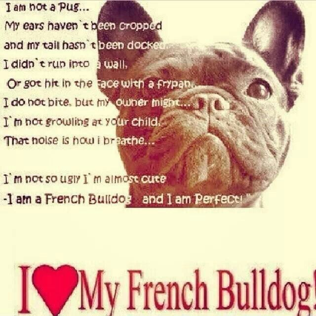 I Love My Frenchie French Bulldog Quotes Bulldog Puppies