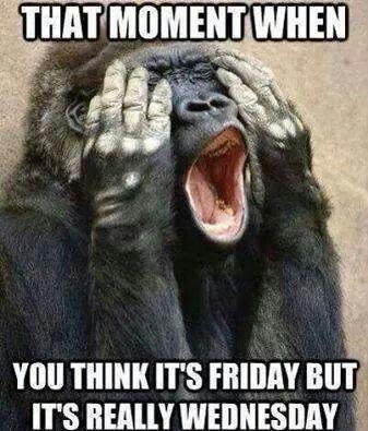 Haahha Wednesday Memes Monkeys Funny Wednesday Humor
