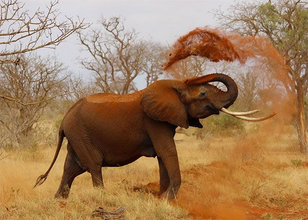 Top10 Animais Matadores De Gente Animais Silvestres Wild Life E