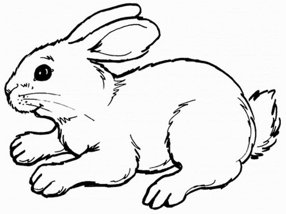 Rabbit Coloring Page Hewan Gambar Hewan Binatang
