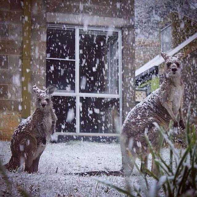 Snowy winter's day in Australia...must be Tasmania, or maybe The Blue  Mountains. | Paesaggi, Immagini, Animali