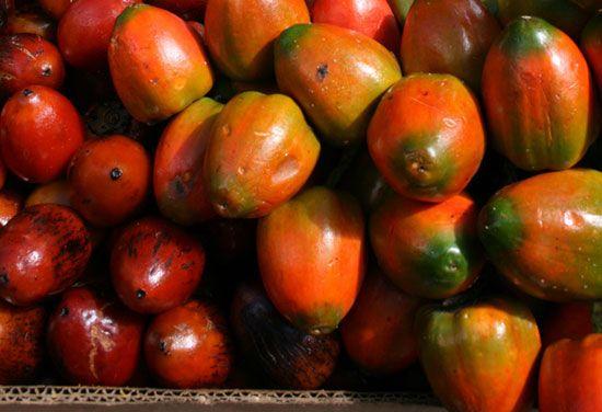 Frutoterapia para adelgazar tomate de arbol ecuador