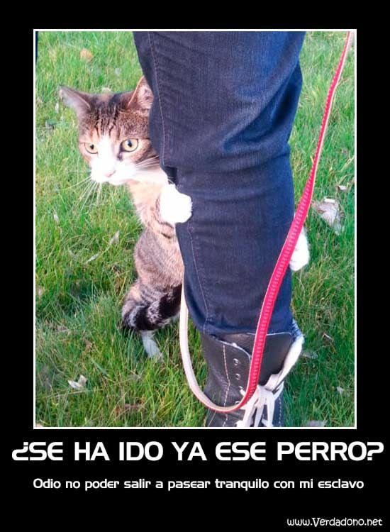 Gato Y Esclavo De Paseo Fotos Divertidas De Gatos Humor Divertido Sobre Animales Imagenes Divertidas De Animales