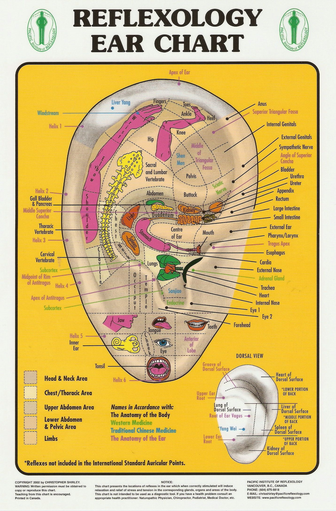 Joannamagrath Reflexology Ear