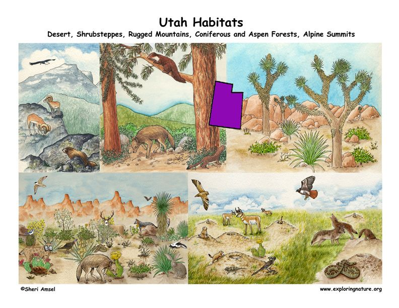 Utah animals, environments Habitats, Utah, Mammals