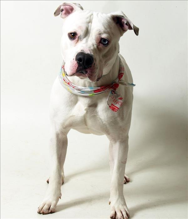 Franklin County Dog Shelter Adoption Center Adoption Service