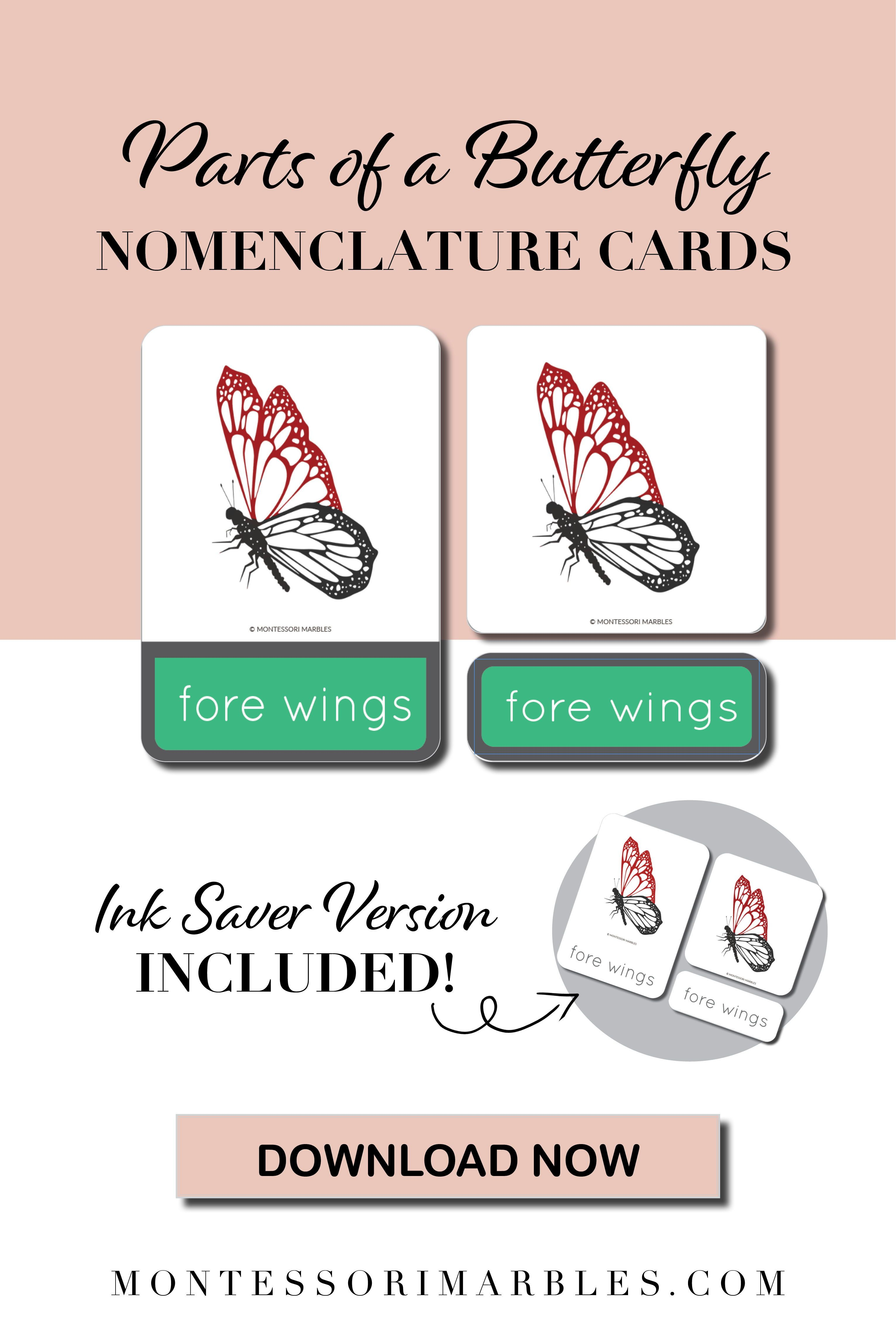 Parts Of A Butterfly Nomenclature Cards