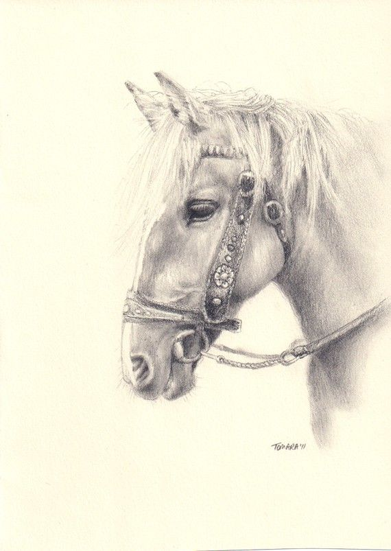 Print of pencil drawing of a pony on a sketch card.
