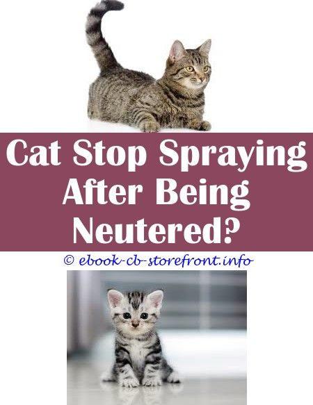 10 Robust Tips Natural Tick Spray For Cats Flea Spray For Cats Natural Calming Spray For Cats Walmart Automatic Cat Repellent Spray How To Ke Con Imagenes Sensible