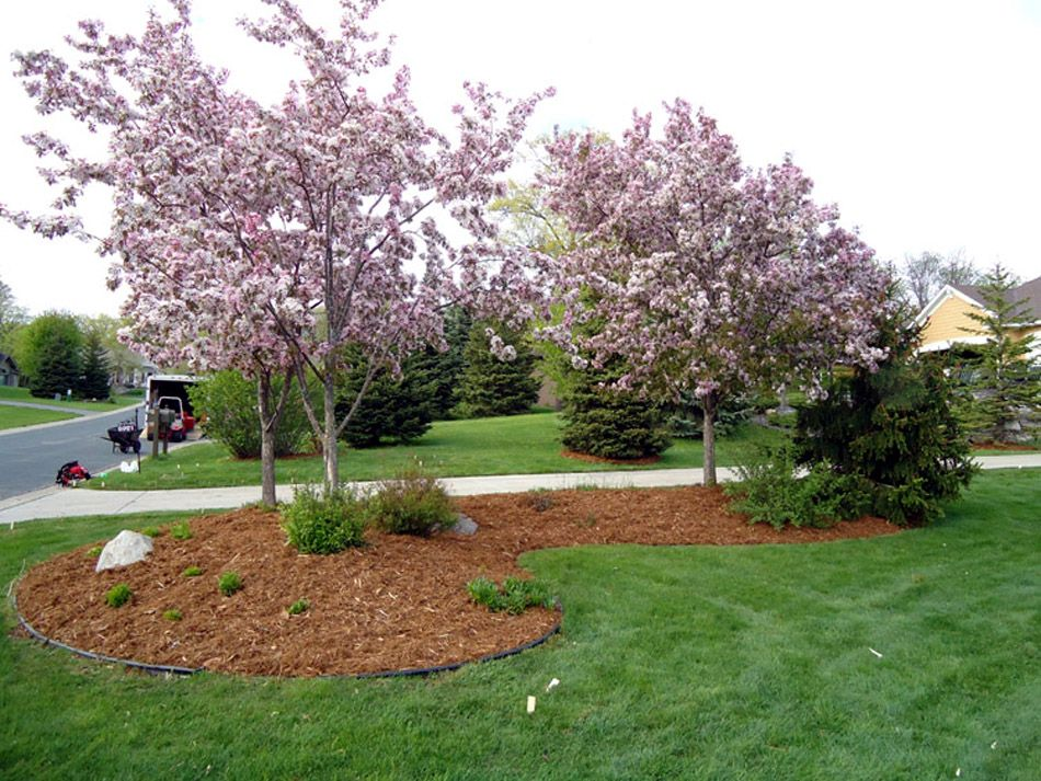 Cedar mulch is very easy to apply due to its lightweight