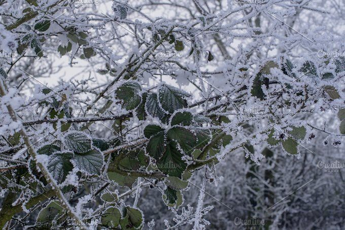 Details of frozen Plants in Winter. Christmas Patterns. $7.00