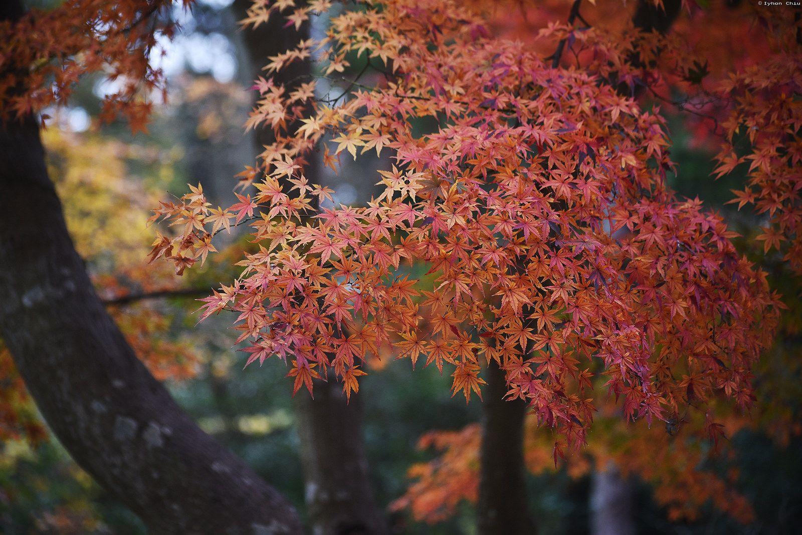 紅葉・北鎌倉 円覚寺 | Engakuji Temple・Kita-Kamakura | Flickr - Photo Sharing!