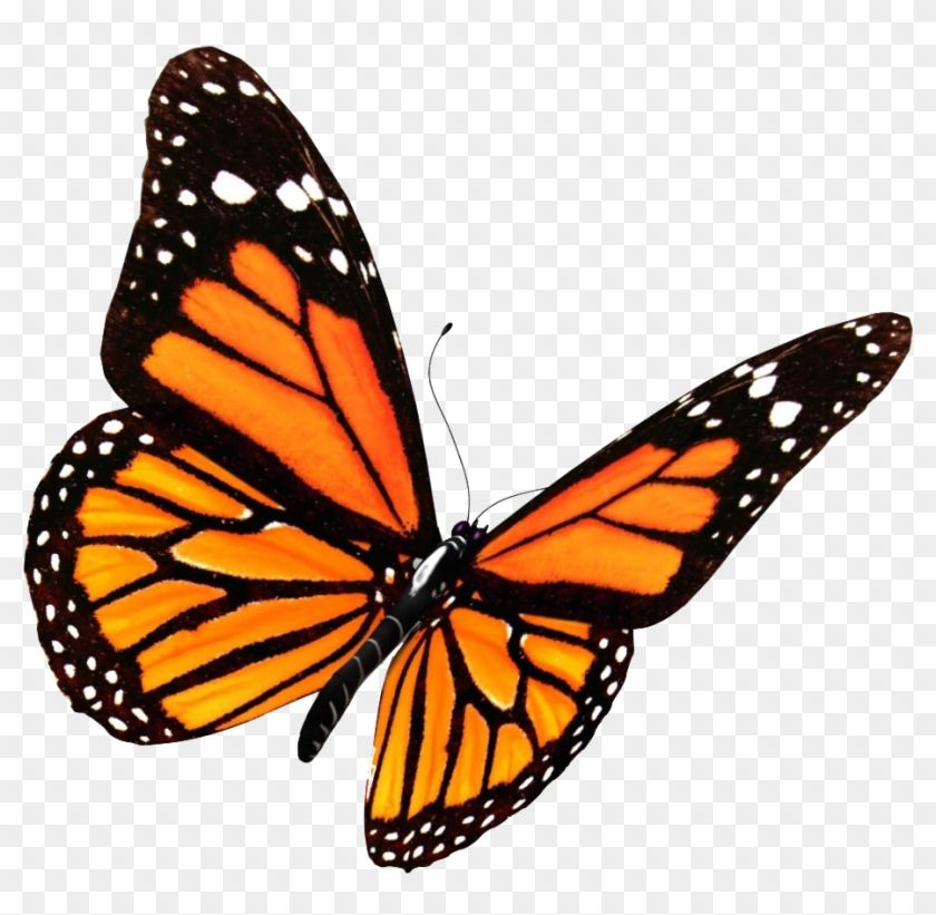 Butterfly Transparent Monarch Butterfly Clipart Transparent Background Png Monarch Butterfly Tattoo Butterfly Clip Art Monarch Butterfly