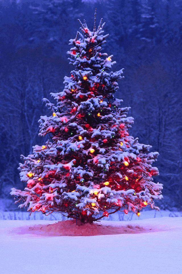 Outdoor Christmas Tree With Lights And Snow Christmaslights