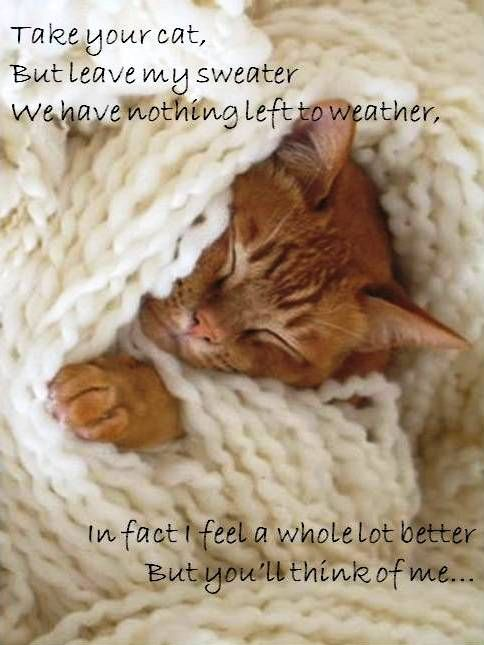 One Of My Favourite Keith Urban Lyrics Quotes Pinterest Cats