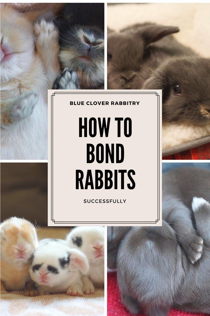 Real Bunnies For Sale Near Me : bunnies, Bunnies, Sale!, Ideas, Bunnies,, Bunny,, Holland